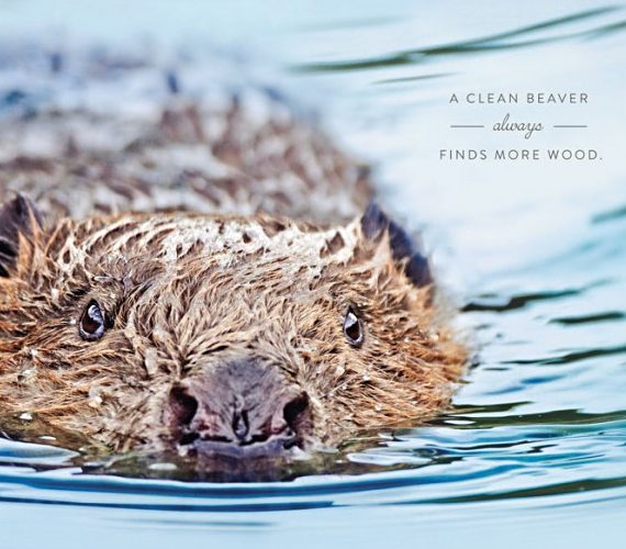 Giggle Snort: A Clean Beaver Always Finds More Wood