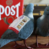 Send A Pigeon In The Mail