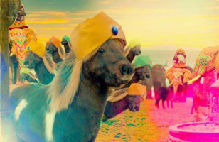 Make Your Own Shetland Ponies Music Video