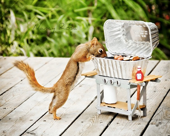 A Day in the Life of a Squirrel
