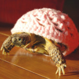 Sweaters Made Just For A Turtle Or Tortoise