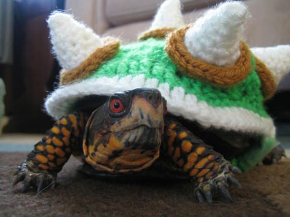 A Bowser Costume For Your Turtle
