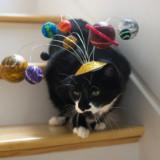 Solar System Cat Hat
