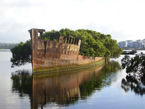 A Floating Forest Growing on an Old Ship