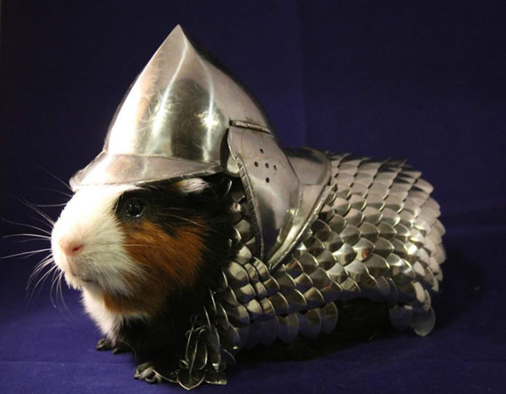 A Suit Of Armor For Your Guinea Pig