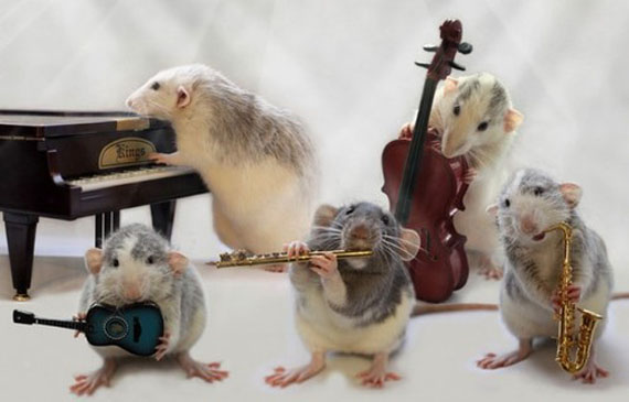 Rats Playing Musical Instruments