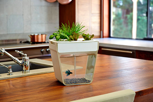 A Self Cleaning Fish Tank Slash Garden Incredible Things
