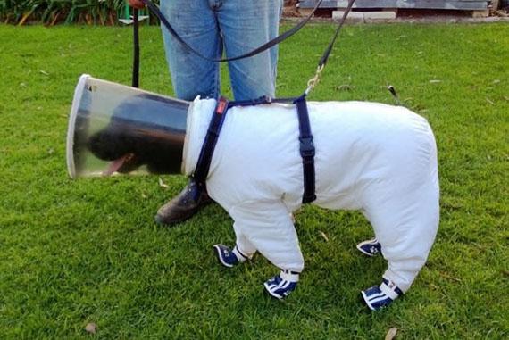 Doggy Jobs: A K-9 Bee Keeper