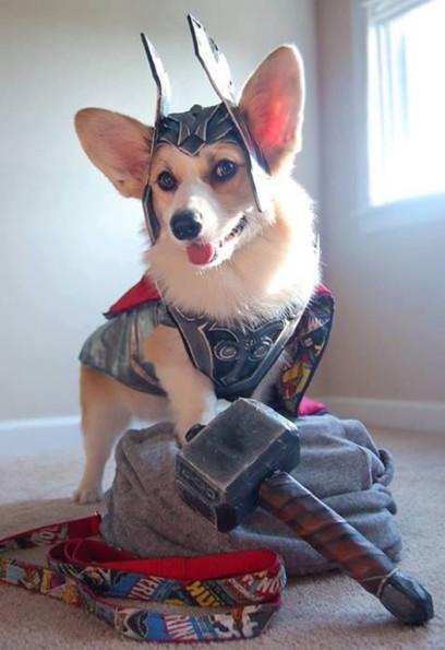 Mighty Thorgi Dog of Asgard