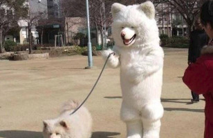 Caption This: Dog Walking Dog [Closed]