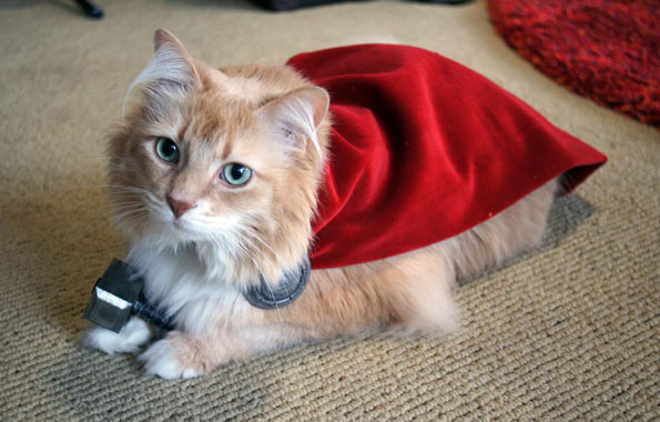 A Cat Dressed Like Thor