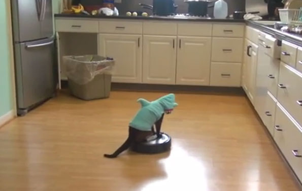 & Cat In A Shark Costume Riding A Roomba   Incredible Things