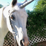 Unicorn Horn For A Horse Or Pony
