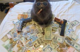 Caption This: Cash Cat [Closed]