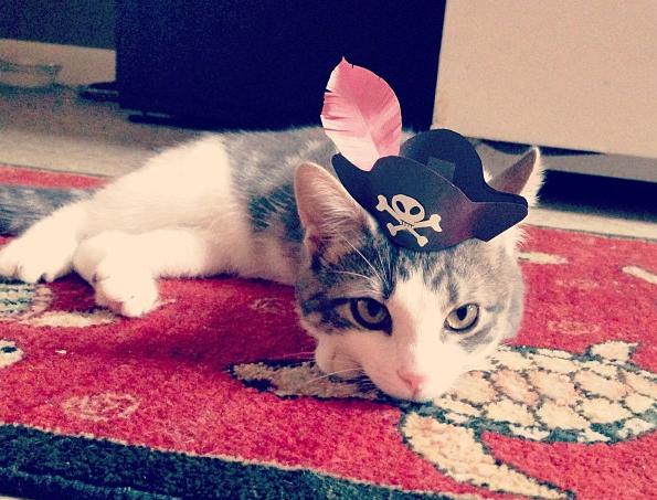 Cute 3,Legged Kitten Wearing Paper Hats