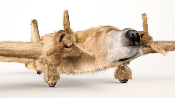 Dog x Plane Mashups