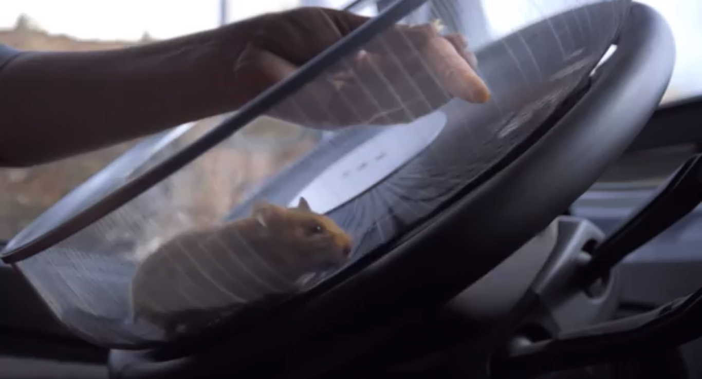 A Hamster Driving A Truck