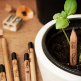 Sprout Seed Pencils