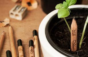 Check Out My Pencil Garden