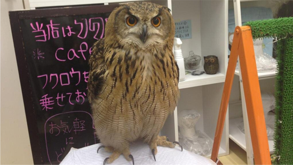 Owl Cafes Are Like Cat Cafes for Harry Potter Fans