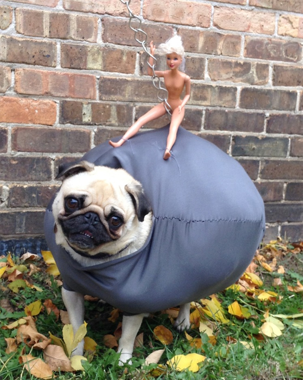 pug wrecking ball halloween costume incredible things - Pugs Halloween Costumes