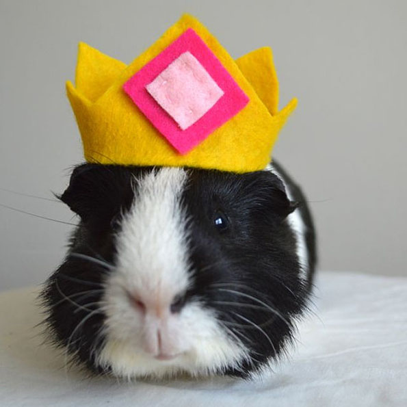 Guinea Pig Halloween Costumes & Guinea Pig Halloween Costumes | Incredible Things