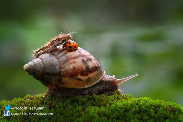 Macro Photos Show Insect BFFs