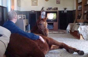 Caption This: Horse Watching TV [Closed]
