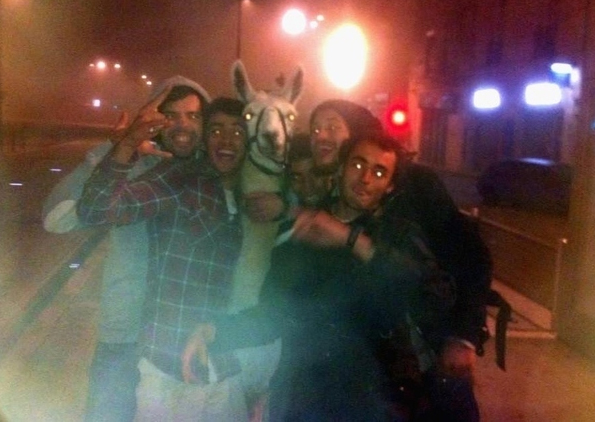 Some Drunk French Teens Partied with a Stolen Llama