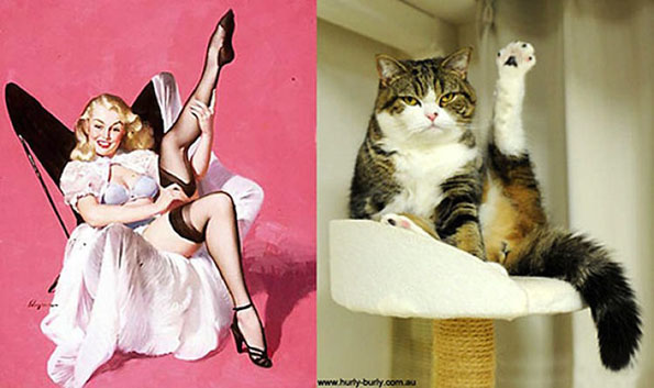 Cats Pose Like Pin Ups