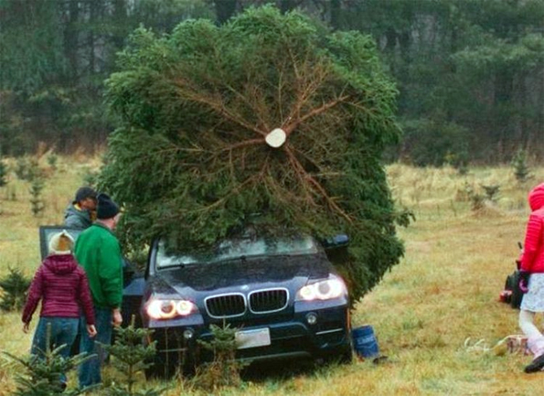 Caption This! Big X-mas Tree (Win Stuff)