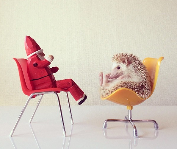 Why Aren't You Following Darcy the Flying Hedgehog on Instagram Yet?