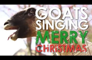 Goats Wish You A Merry Xmas