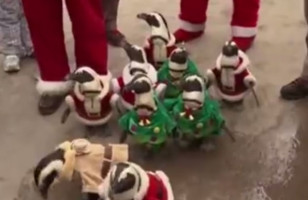 Lil Penguins Dressed As Santa