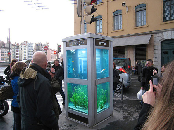 Phone Booth Fish Tanks