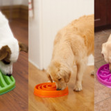 Slo Bowl Dog Feeder