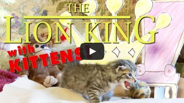 The Lion King Starring Kittens