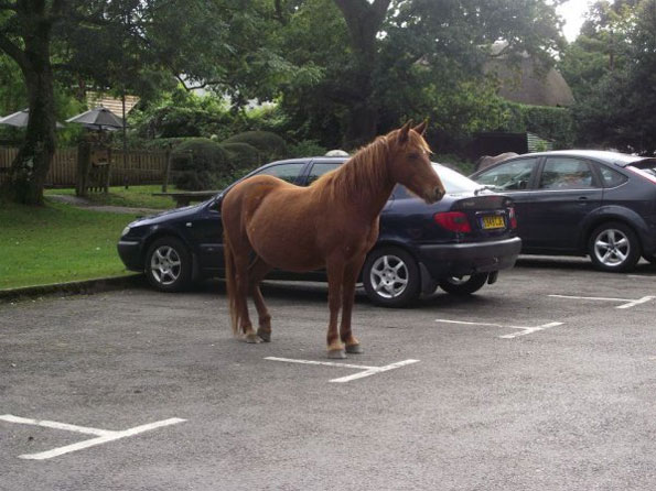 Caption This: Horse Parking [Closed]
