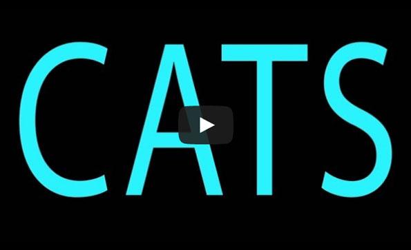 'Girls' Reenacted By Kittens