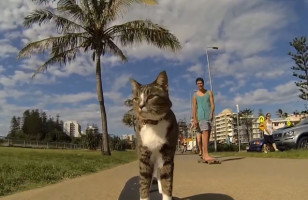 Watch This Cat Pull Off Some Sick Skateboard Tricks