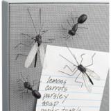 Bug Pushpins