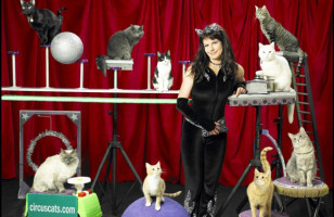 THERE IS A CAT CIRCUS IRL