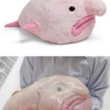 Blobfish Plush