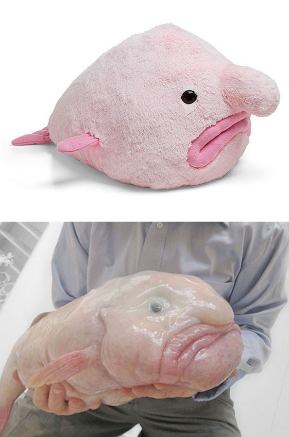 Fugly Toys: Blobfish Plush
