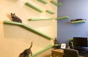 Your Cat Will Be Jealous Of This House Made Just For Kitties