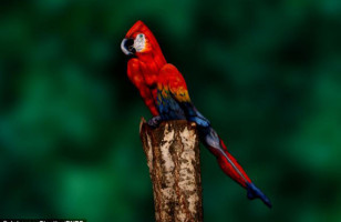 This Parrot Body Paint Is Eye Tickery!