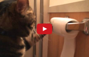 Cat Re-Rolls Toilet Paper He Unrolled