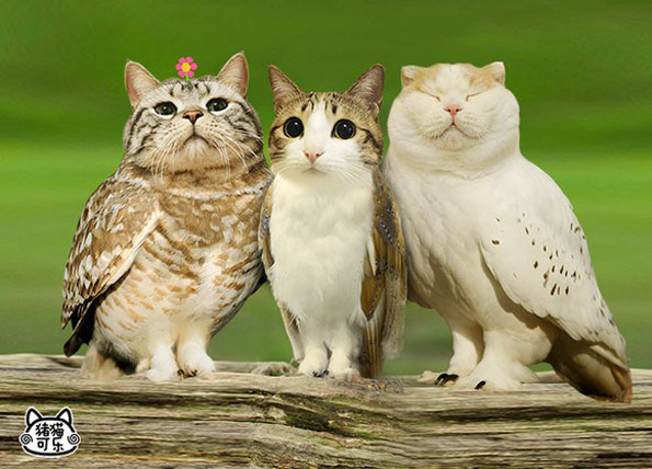 [Image: meowls-cat-head-owl-body-1.jpg]