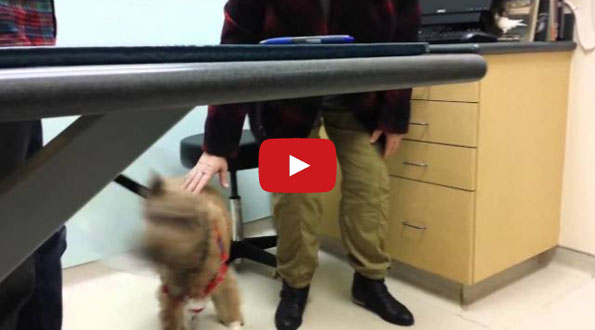 Watch This Blind Dog See His Fam Post Eye Surgery Amp Smile