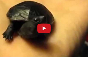 Baby Animals Yawning Will Make You Squee & Possibly Yawn